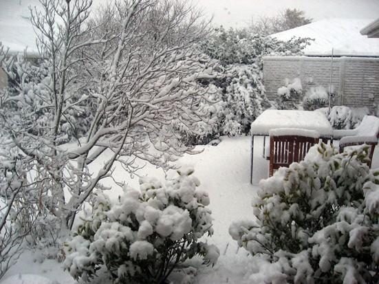 Mid-winter xmas