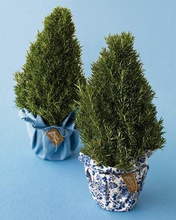 Christmas Gift Guide 2011 - Christmas Herb Plants