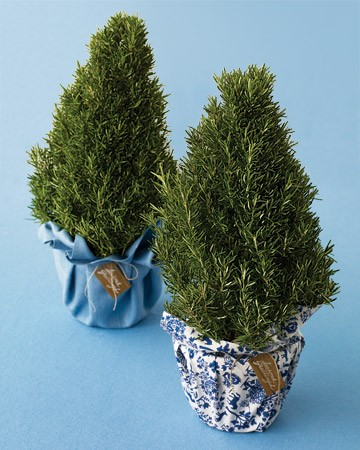 Christmas Gift Guide 2011 - Christmas Herb Plants
