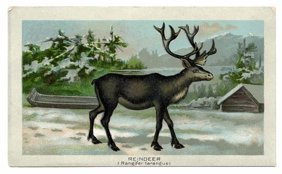 Christmas Gift Guide 2011 - Vintage Xmas Postcard